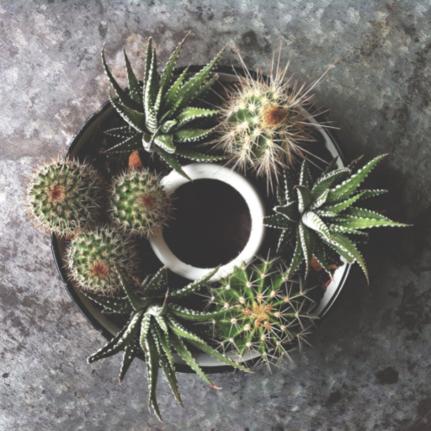 Cactus plant decor